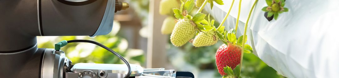 robot che raccoglie fragole